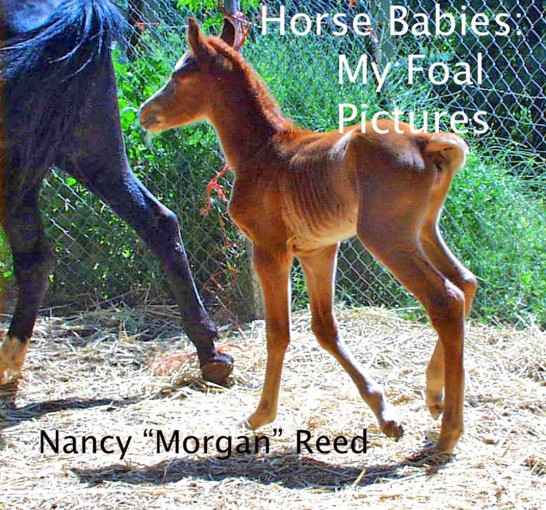 """Horse Babies: My Foal Pictures by Nancy """"Morgan"""" Reed"""