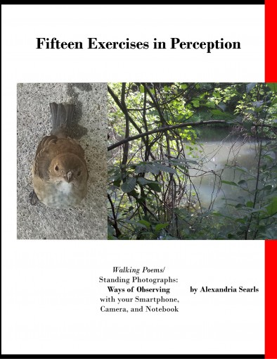Fifteen Exercises in Perception: Walking Poems/Standing Photographs, Ways of Observing with your Smartphone, Camera, and Notebook by Alexandria Searls