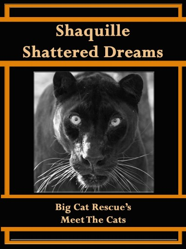 Shaquille, Shattered Dreams (Meet The Cat Book 1) by Carole Baskin