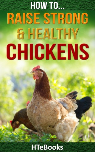 How To Raise Strong & Healthy Chickens: Quick Start Guide (How To eBooks Book 45) by HTeBooks